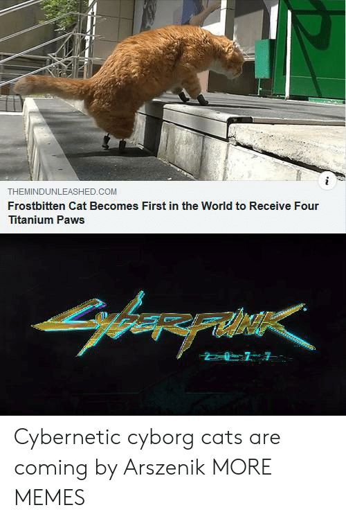 cyborg: THEMINDUNLEASHED.COM  Frostbitten Cat Becomes First in the World to Receive Four  Titanium Paws Cybernetic cyborg cats are coming by Arszenik MORE MEMES