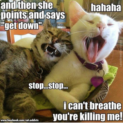 youre killing me: then she  hahaha  points and says  get down  stop. Stop...  i can't breathe  you're killing me!  www.facebook.com/cat.addicts