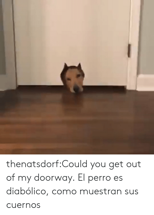 sus: thenatsdorf:Could you get out of my doorway.  El perro es diabólico, como muestran sus cuernos