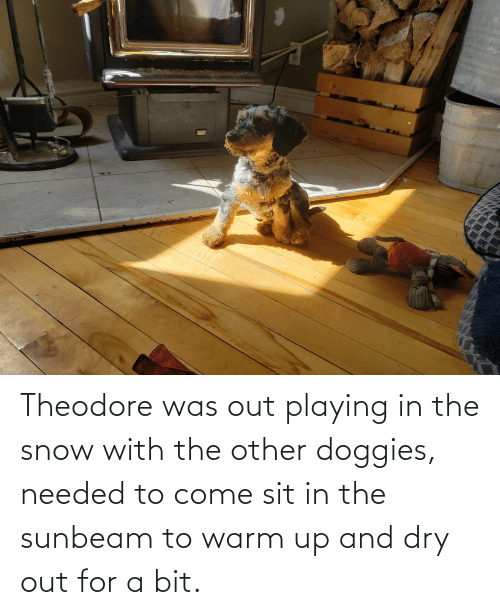 Sit In: Theodore was out playing in the snow with the other doggies, needed to come sit in the sunbeam to warm up and dry out for a bit.