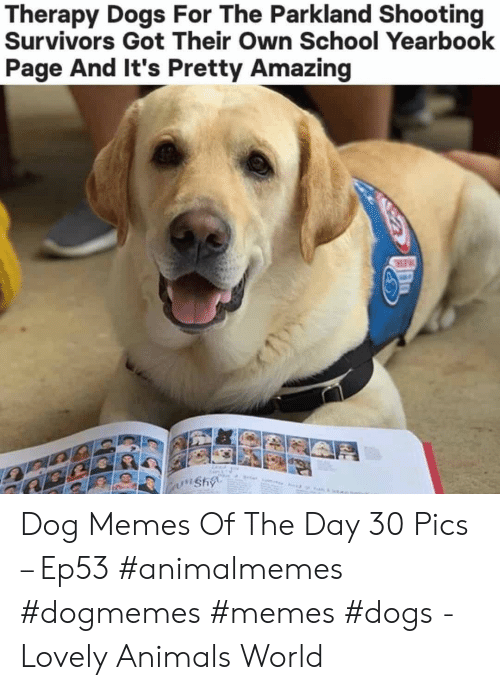 Yearbook: Therapy Dogs For The Parkland Shooting  Survivors Got Their Own School Yearbook  Page And It's Pretty Amazing  wnshy Dog Memes Of The Day 30 Pics – Ep53 #animalmemes #dogmemes #memes #dogs - Lovely Animals World
