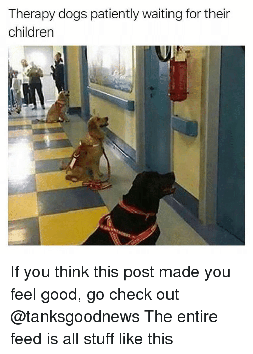 Children, Dogs, and Funny: Therapy dogs patiently waiting for their  children If you think this post made you feel good, go check out @tanksgoodnews The entire feed is all stuff like this