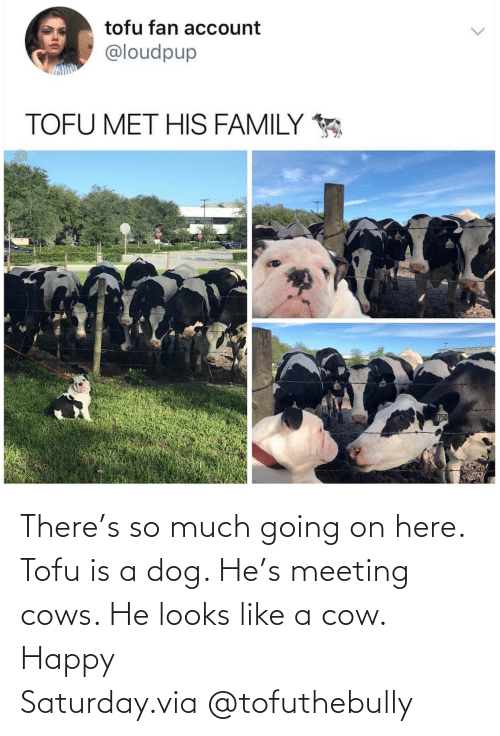 so much: There's so much going on here. Tofu is a dog. He's meeting cows. He looks like a cow. Happy Saturday.via @tofuthebully