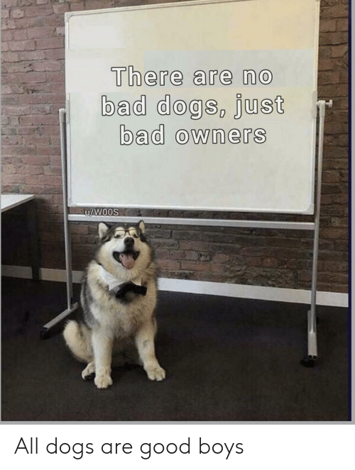 all dogs: There are no  bad dogs, Just  bad owners All dogs are good boys