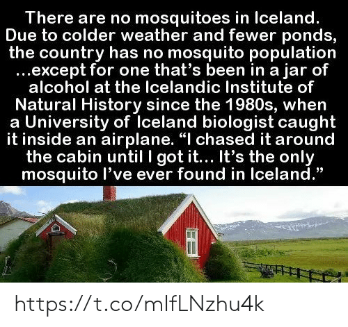 "Iceland: There are no mosquitoes in Iceland.  Due to colder weather and fewer ponds,  the country has no mosquito population  ...except for one that's been in a jar of  alcohol at the Icelandic Institute of  Natural History since the 1980s, when  a University of Iceland biologist caught  it inside an airplane. ""I chased it around  the cabin until I got it... It's the only  mosquito l've ever found in Iceland."" https://t.co/mIfLNzhu4k"