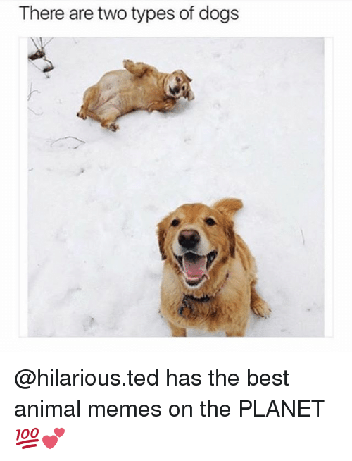 Funniest Meme On The Planet : There are two types of dogs has the best animal memes on