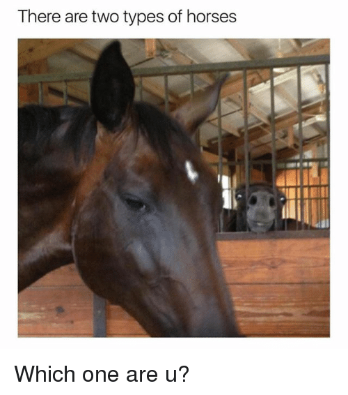 Horses, Ironic, and One: There are two types of horses Which one are u?