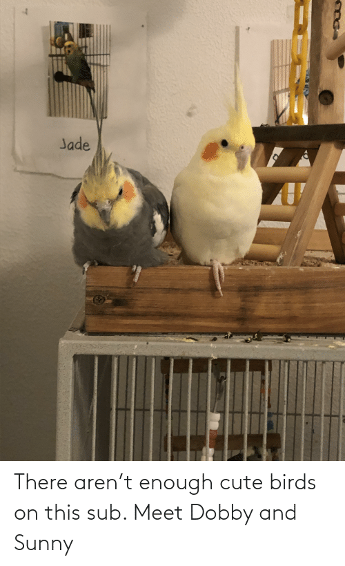 sunny: There aren't enough cute birds on this sub. Meet Dobby and Sunny