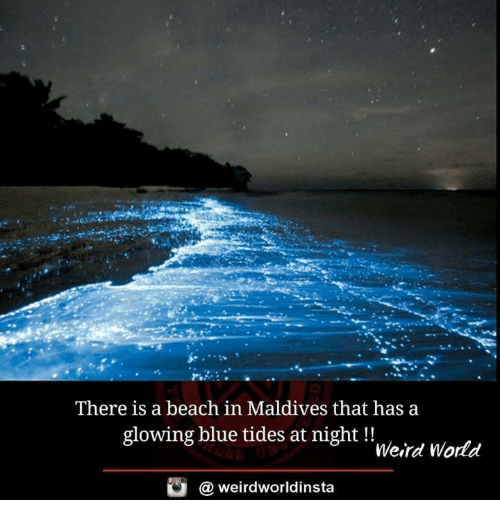 Memes, Weird, and Beach: There is a beach in Maldives that has a  glowing blue tides at night !!  Weird World  @ weirdworldinsta