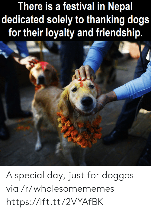 Nepal: There is a festival in Nepal  dedicated solely to thanking dogs  for their loyalty and friendship. A special day, just for doggos via /r/wholesomememes https://ift.tt/2VYAfBK