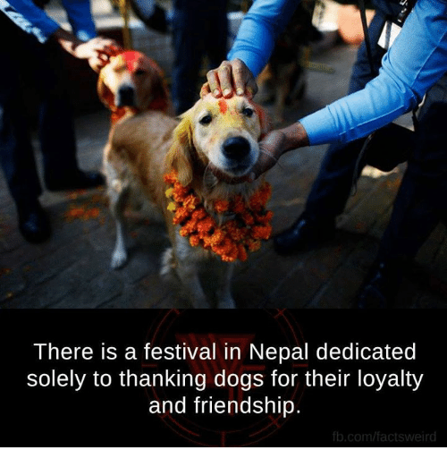 fb.com: There is a festival in Nepal dedicated  solely to thanking dogs for their loyalty  and friendship  fb.com/factsweird