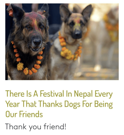 Nepal: There Is A Festival In Nepal Every  Year That Thanks Dogs For Being  Our Friends Thank you friend!