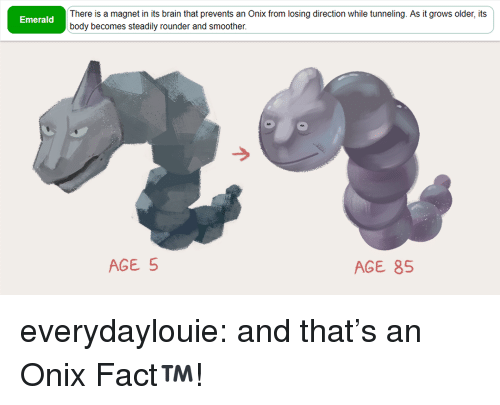 emerald: There is a magnet in its brain that prevents an Onix from losing direction while tunneling. As it grows older, its  body becomes steadily rounder and smoother  Emerald  AGE 5  AGE 85 everydaylouie: and that's an Onix Fact™️!