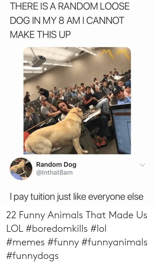 lol memes: THERE IS A RANDOM LOOSE  DOG IN MY 8 AMI CANNOT  MAKE THIS UP  Random Dog  @Inthat8am  Ipay tuition just like everyone else 22 Funny Animals That Made Us LOL #boredomkills #lol #memes #funny #funnyanimals #funnydogs