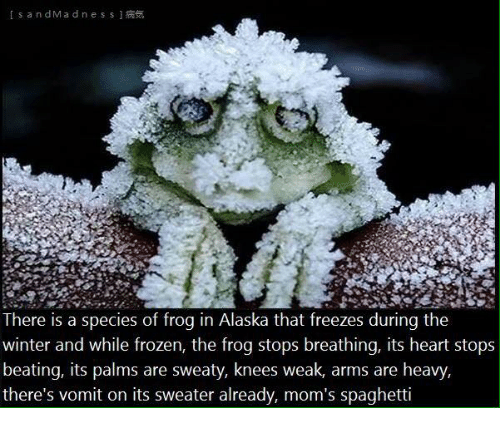 there-is-a-species-of-frog-in-alaska-tha