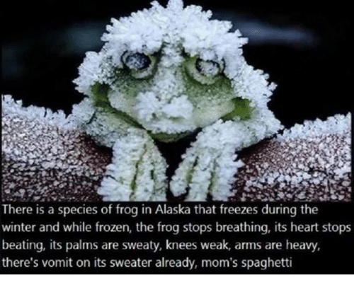 Vomiting: There is a species of frog in Alaska that freezes during the  winter and while frozen, the frog stops breathing, its heart stops  beating, its palms are sweaty, knees weak, arms are heavy,  there's vomit on its sweater already, mom's spaghetti