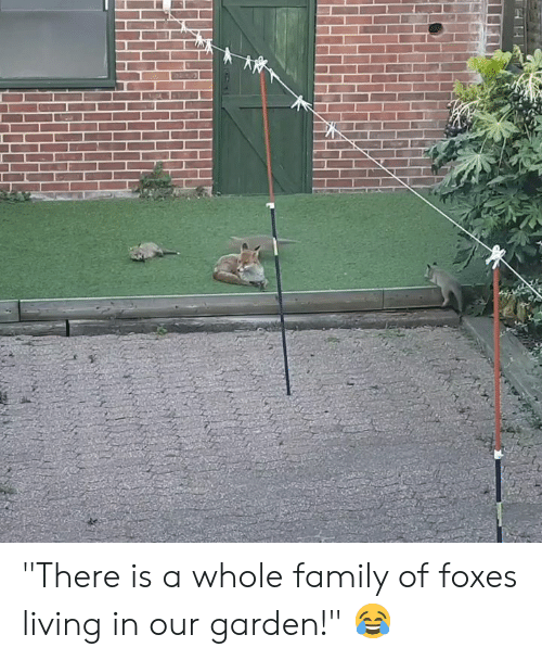 "Family, Living, and Foxes: ""There is a whole family of foxes living in our garden!"" 😂"