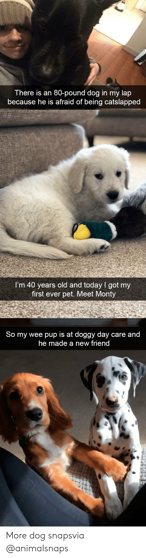 monty: There is an 80-pound dog in my lap  because he is afraid of being catslapped   I'm 40 years old and today I got my  first ever pet. Meet Monty   So my wee pup is at doggy day care and  he made a new friend More dog snapsvia @animalsnaps