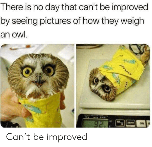 weigh: There is no day that can't be improved  by seeing pictures of how they weigh  an owl.  92. Can't be improved