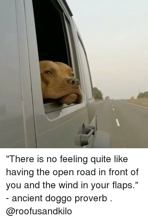 "winding: ""There is no feeling quite like having the open road in front of you and the wind in your flaps."" - ancient doggo proverb . @roofusandkilo"