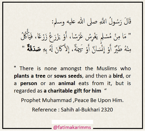 """Animal, Tree, and Muhammad: """" There is none amongst the Muslims who  plants a tree or sows seeds, and then a bird, or  a person or an animal eats from it, but is  regarded as a charitable gift for him  Prophet Muhammad ,Peace Be Upon Him  Reference Sahih al-Bukhari 2320  @fatimakarimms"""