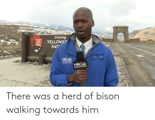bison: There was a herd of bison walking towards him