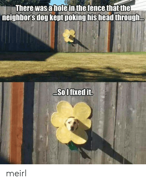 the neighbors: There was a holein the fence that the  neighbor's dog kept poking his head through.  Sol fixed it meirl