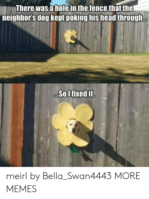 the neighbors: There was a holein the fence that the  neighbor's dog kept poking his head through.  Sol fixed it meirl by Bella_Swan4443 MORE MEMES
