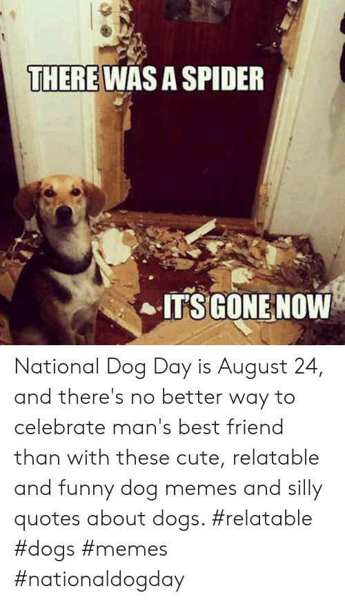 Silly Quotes: THERE WAS A SPIDER  ITSGONE NOW National Dog Day is August 24, and there's no better way to celebrate man's best friend than with these cute, relatable and funny dog memes and silly quotes about dogs.  #relatable #dogs #memes #nationaldogday