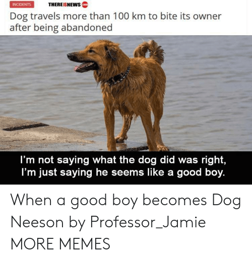 Im Just Saying: THEREISNEWws  INCIDENTS  Dog travels more than 100 km to bite its owner  after being abandoned  I'm not saying what the dog did was right,  I'm just saying he seems like a good boy. When a good boy becomes Dog Neeson by Professor_Jamie MORE MEMES