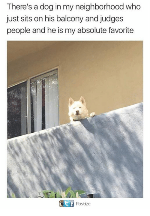 tif: There's a dog in my neighborhood who  just sits on his balcony and judges  people and he is my absolute favorite  tif  Postize