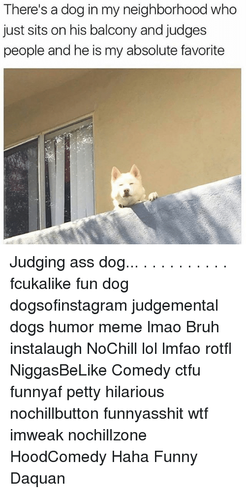 Ass, Bruh, and Ctfu: There's a dog in my neighborhood who  just sits on his balcony and judges  people and he is my absolute favorite Judging ass dog... . . . . . . . . . . fcukalike fun dog dogsofinstagram judgemental dogs humor meme lmao Bruh instalaugh NoChill lol lmfao rotfl NiggasBeLike Comedy ctfu funnyaf petty hilarious nochillbutton funnyasshit wtf imweak nochillzone HoodComedy Haha Funny Daquan