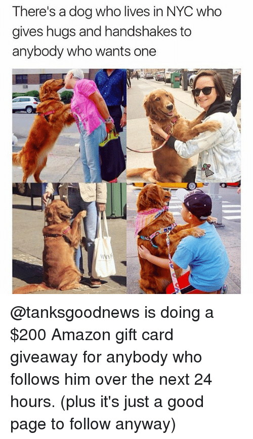 Amazon, Bailey Jay, and Memes: There's a dog who lives in NYC who  gives hugs and handshakes to  anybody who wants one @tanksgoodnews is doing a $200 Amazon gift card giveaway for anybody who follows him over the next 24 hours. (plus it's just a good page to follow anyway)