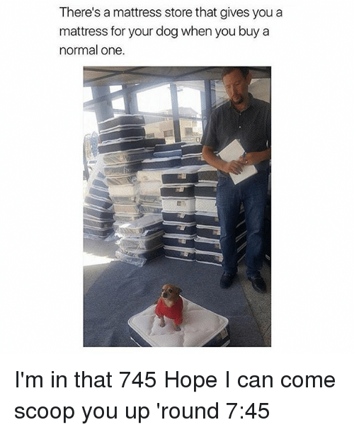 Dogs, Girl, and Mattress: There's a mattress store that gives you a  mattress for your dog when you buy a  normal one. I'm in that 745 Hope I can come scoop you up 'round 7:45