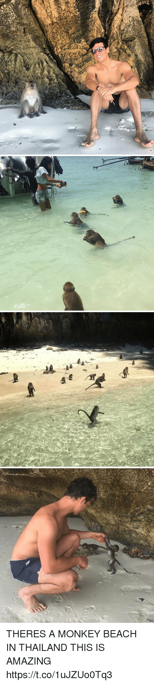 Thailande: THERES A MONKEY BEACH IN THAILAND THIS IS AMAZING https://t.co/1uJZUo0Tq3