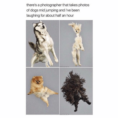 Dogs, Memes, and Been: there's a photographer that takes photos  of dogs mid jumping and ive been  laughing for about half an hour