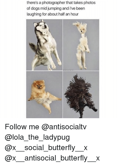Dogs, Memes, and Butterfly: there's a photographer that takes photos  of dogs mid jumping and i've been  laughing for about half an hour Follow me @antisocialtv @lola_the_ladypug @x__social_butterfly__x @x__antisocial_butterfly__x