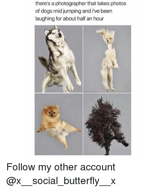 Dogs, Memes, and Butterfly: there's a photographer that takes photos  of dogs mid jumping and i've beern  laughing for about half an hour Follow my other account @x__social_butterfly__x