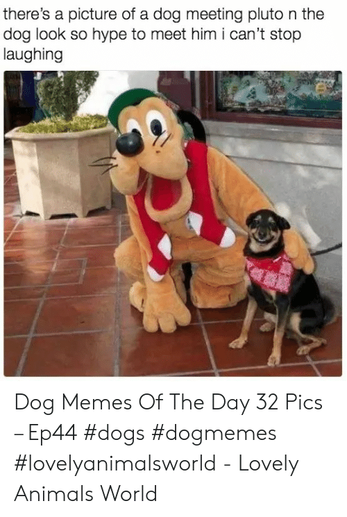 Pluto: there's a picture of a dog meeting pluto n the  dog look so hype to meet him i can't stop  laughing Dog Memes Of The Day 32 Pics – Ep44 #dogs #dogmemes #lovelyanimalsworld - Lovely Animals World