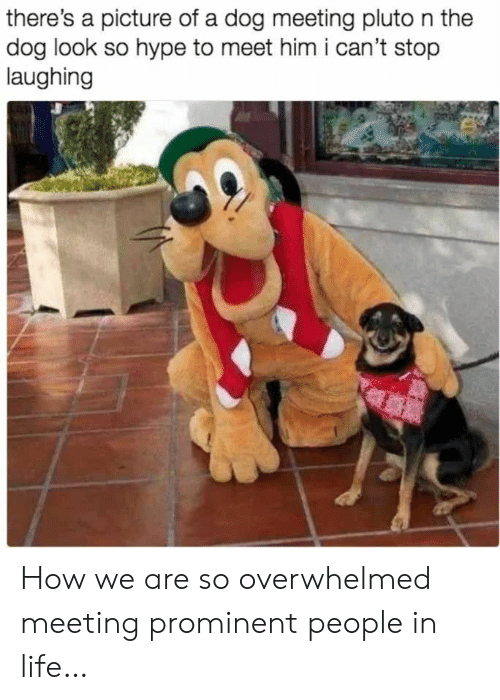 meeting: there's a picture of a dog meeting pluto n the  dog look so hype to meet him i can't stop  laughing How we are so overwhelmed meeting prominent people in life…
