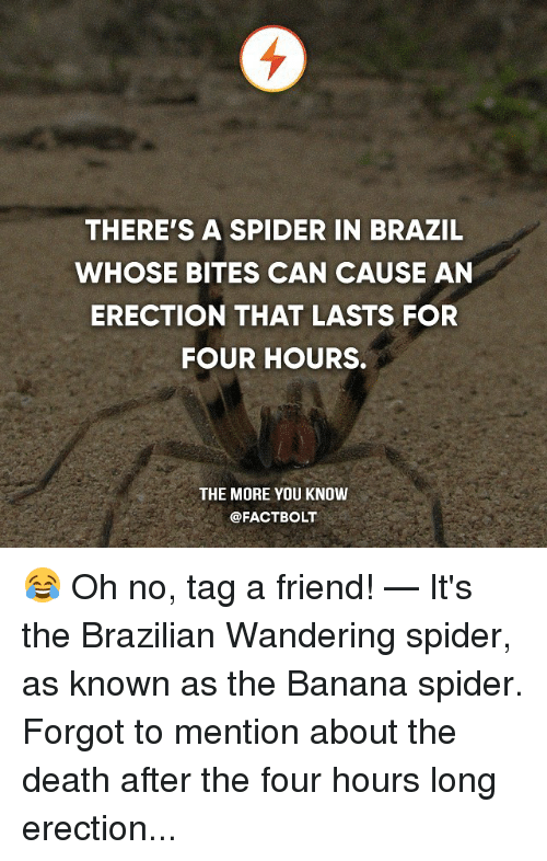 Memes, Spider, and The More You Know: THERE'S A SPIDER IN BRAZIL  WHOSE BITES CAN CAUSE AN  ERECTION THAT LASTS FOR  FOUR HOURS.  THE MORE YOU KNOW  @FACT BOLT 😂 Oh no, tag a friend! — It's the Brazilian Wandering spider, as known as the Banana spider. Forgot to mention about the death after the four hours long erection...