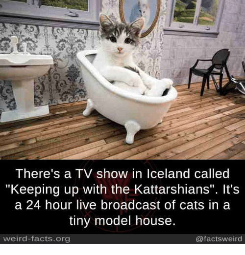 """modelling: There's a TV show in Iceland called  Keeping up with the Kattarshians"""". It's  a 24 hour live broadcast of cats in a  tiny model house  weird-facts.org  @factsweird"""
