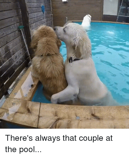 Pool, Couple, and Always: There's always that couple at the pool...