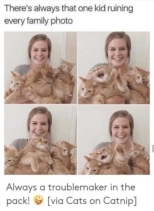Cats On Catnip: There's always that one kid ruining  every family photo Always a troublemaker in the pack! 🤪  [via Cats on Catnip]