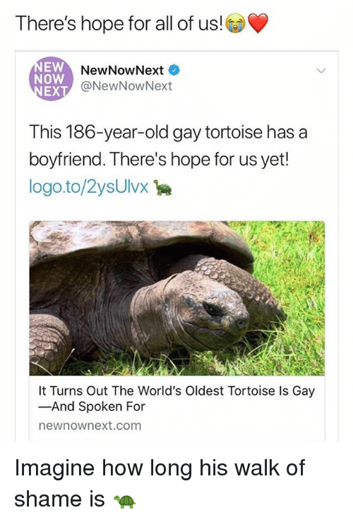 Grindr, Boyfriend, and Old: There's hope for all of us!  EW  Now  EX  NewNowNext  @NewNowNext  This 186-year-old gay tortoise has a  boyfriend. There's hope for us yet  logo.to/2ysUlvx  It Turns Out The World's Oldest Tortoise Is Gay  -And Spoken For  newnownext.com Imagine how long his walk of shame is 🐢