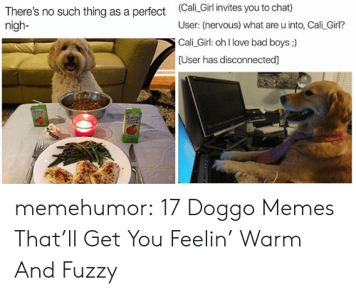 Doggo Memes: There's no such thing as a perfect Cali Girl invites you to chat)  nigh-  User: (nervous) what are u into, Cali_Girl?  Cali Girl: oh l love bad boys ;)  User has disconnected]  Lit memehumor:  17 Doggo Memes That'll Get You Feelin' Warm And Fuzzy