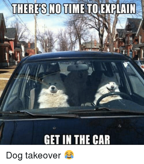 no time to explain: THERE'S NO TIME TO EXPLAIN  GET IN THE CAR Dog takeover 😂