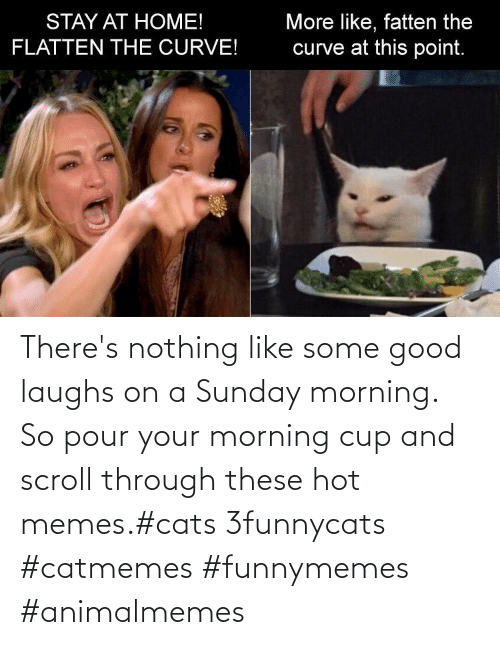 Hot Memes: There's nothing like some good laughs on a Sunday morning.  So pour your morning cup and scroll through these hot memes.#cats 3funnycats #catmemes #funnymemes #animalmemes