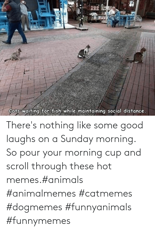 morning: There's nothing like some good laughs on a Sunday morning.  So pour your morning cup and scroll through these hot memes.#animals #animalmemes #catmemes #dogmemes #funnyanimals #funnymemes