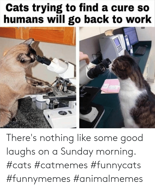 Cats: There's nothing like some good laughs on a Sunday morning. #cats #catmemes #funnycats #funnymemes #animalmemes